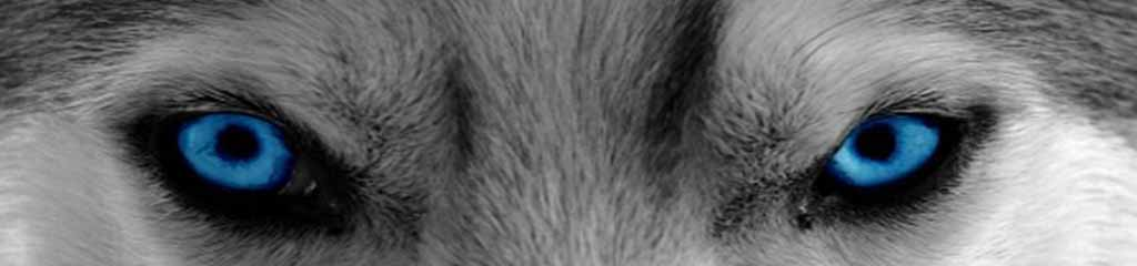 Header Opleiding Hondenspecialist